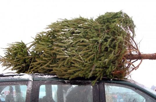 bigstock-huge-christmas-tree_b-e1511998700975